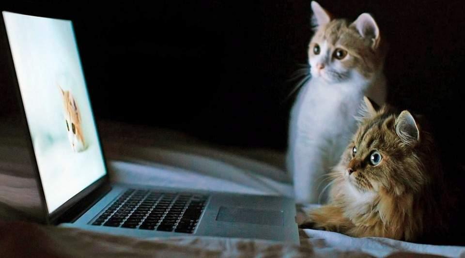 Tips Menjaga Kualitas Laptop Bagi Pemula