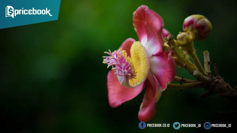 Foto Bokeh dan 4 Faktor Penting Membuat Foto Bokeh Berkualitas