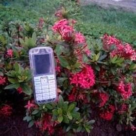 yanto phonesell