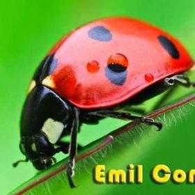 emilcomp (Bukalapak)